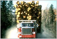 Maine Logging